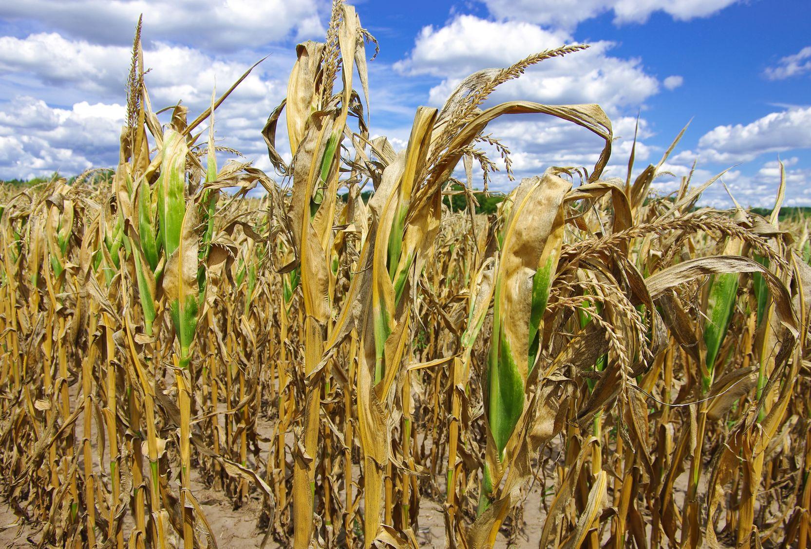 ပြောင်းလဲလာသည့်ရာသီဥတုနှင့်အညီ သီးနှံစိုက်ပျိုးရေး