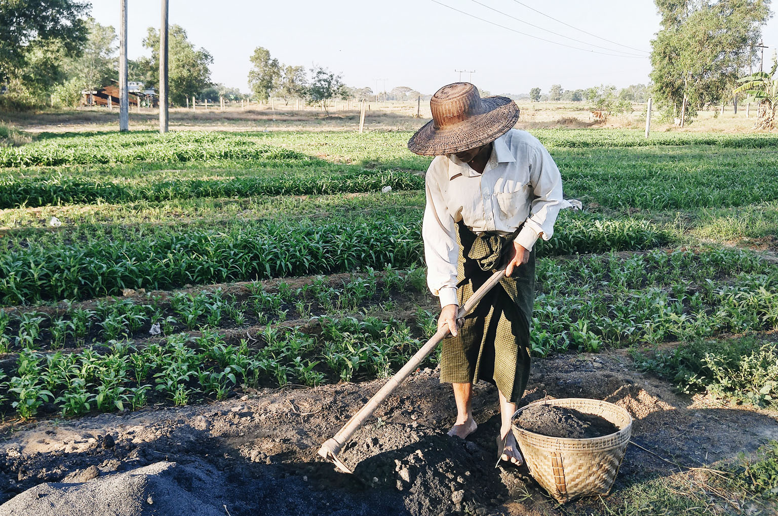 သြဂဲနစ်စိုက်ပျိုးရေးတွင် အသုံးပြုသော စိုက်ပျိုးနည်း စနစ်များ