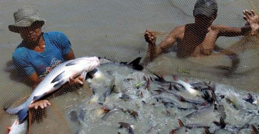 ထိုင်းနိုင်ငံက လစဉ် ပြည်တွင်းရေချိုငါး အကြေးခွံ တန် ၅၀ ဝယ်ယူမည်