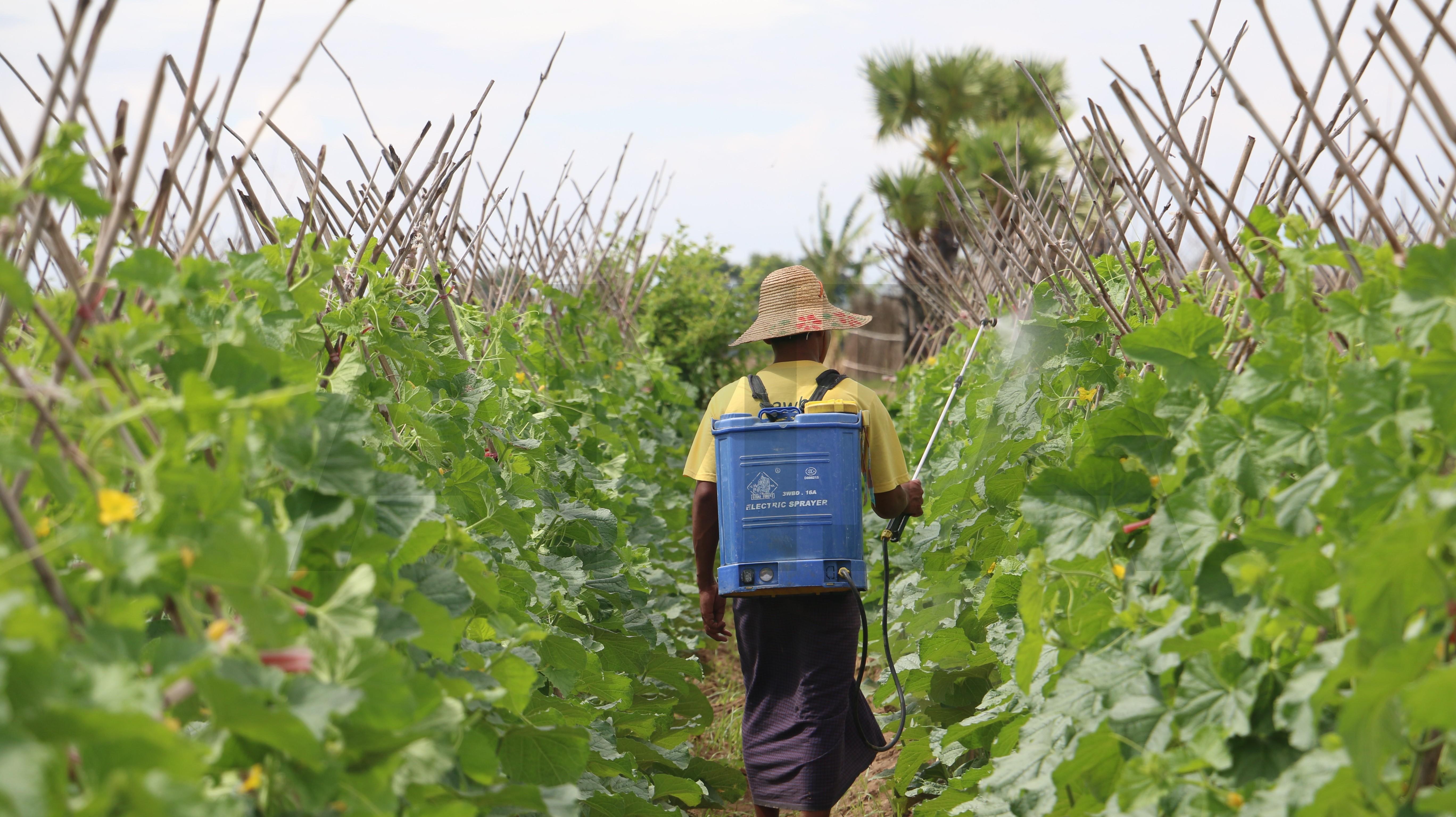 စိုက်ပျိုးရေးသုံး ပစ္စည်းများ သတ်မှတ်ချက်များနှင့် ကိုက်ညီမှု မရှိပါက အရေးယူမည်