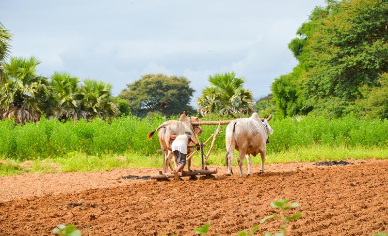 နာလန်မထူနိုင်သူတို့၏ စိုက်ပျိုးရေးတာအဖွင့်