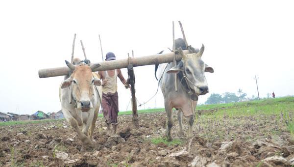 မပြောင်းလဲနိုင်ခြင်း သံသရာကြားက မြန်မာ့စိုက်ပျိုးရေးကဏ္ဍ
