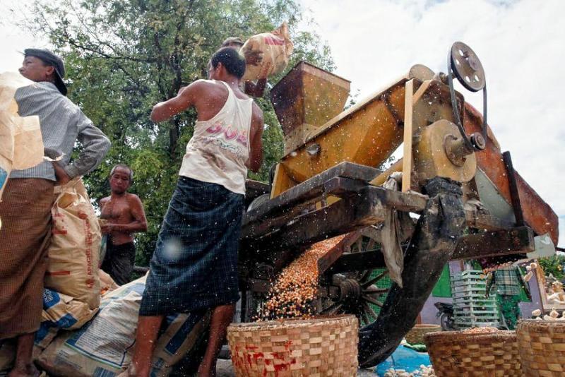 မုန်တိုင်းမိုးကြောင့် ရေစကြိုပြောင်းစိုက်တောင်သူများ အခက်အခဲတွေ့