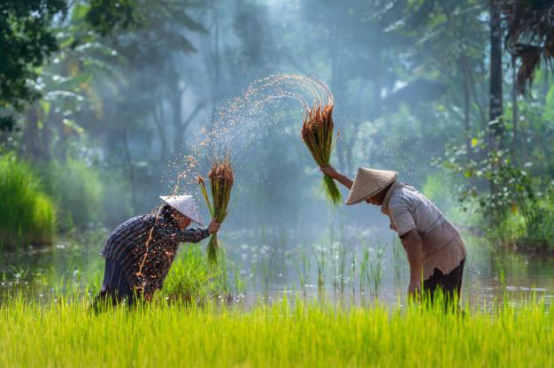"""""""စိုက်ပျိုးရေးတွင် စီးပွားရေးအား နားလည်ခြင်း"""""""