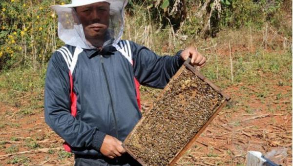 ပျားမွေးမြူရေးကြောင့် ဝင်ငွေများစေပြီး စိုက်ပျိုးရေးကိုပါ အထောက်အကူဖြစ်