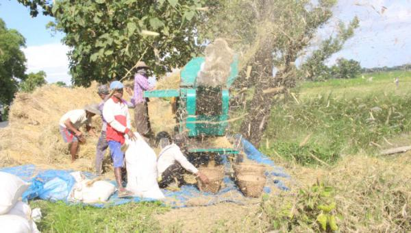 တိုင်းဧရာရဲ့ စက်မှုလယ်ယာ ကူးပြောင်းရေး အခက်အခဲ