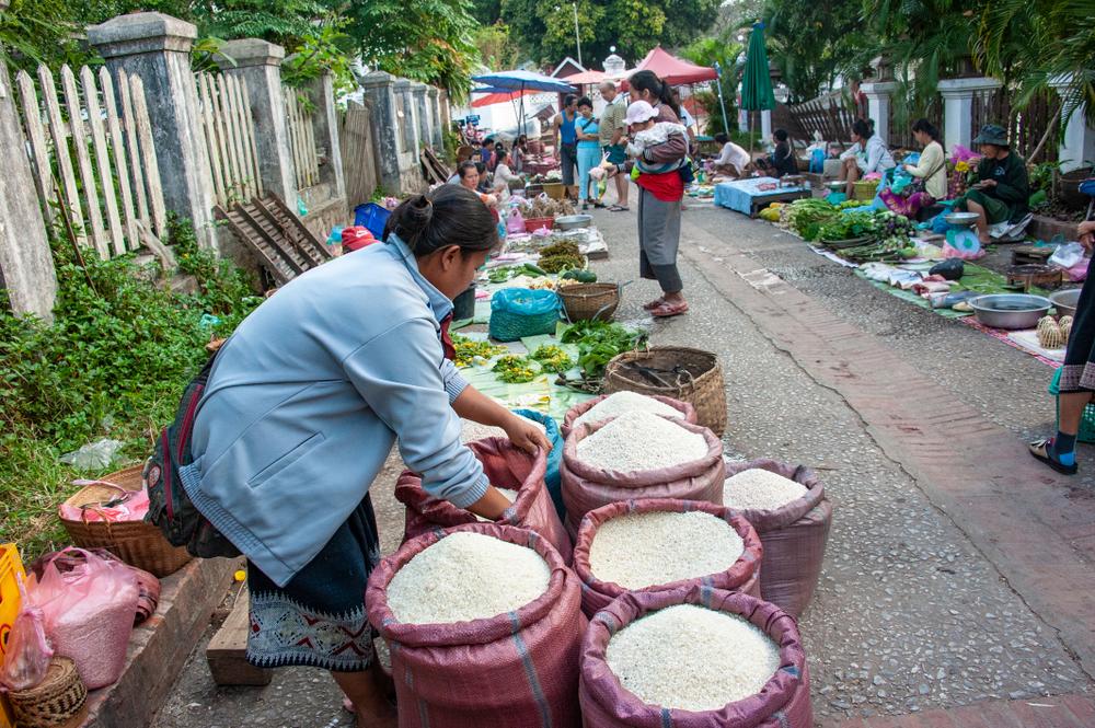 ရာသီဥတုပြောင်းလဲမှုဒဏ်ကို ကာကွယ်နိုင်သော ဆန်စပါးစီမံကိန်းသစ် စတင်မည်