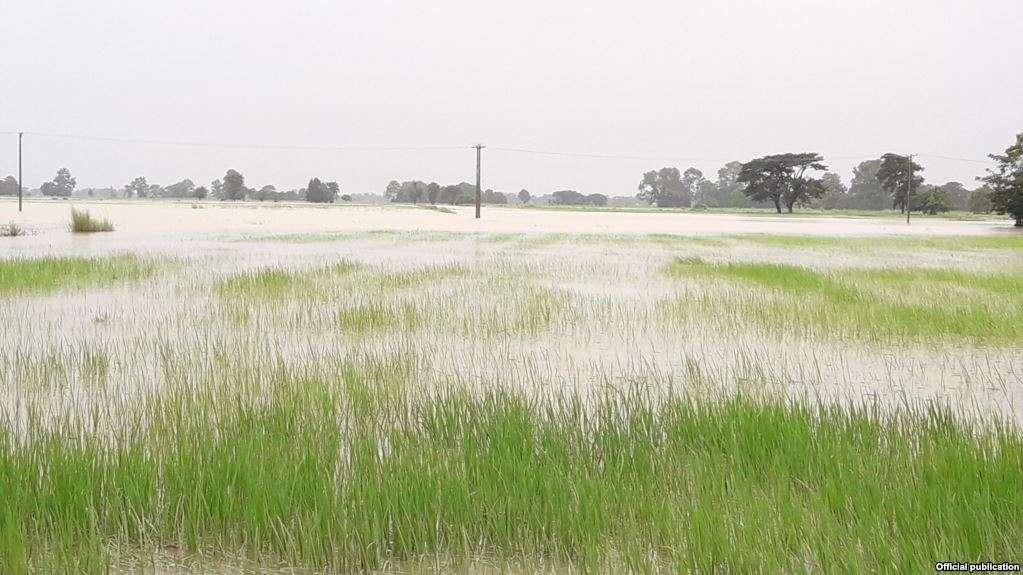 ရေကြီးမှုကြောင့် လယ်မြေဧက ၇သိန်းကျော်ရေမြုပ်ပြီး ၃သိန်းကျော်ပျက်စီး (VOA)