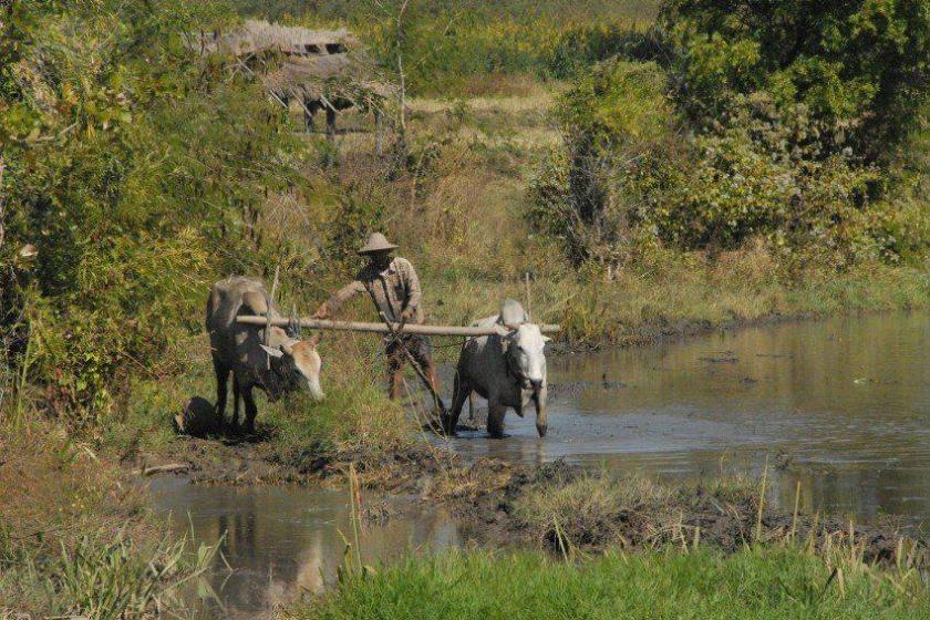 မြေလွတ်မြေရိုင်း လုပ်ပိုင်ခွင့်အတွက် မကွေးတွင်စကောက်၊ မြေသိမ်းခံရမည်ကို ဒေသခံအချို့စိုးရိမ်
