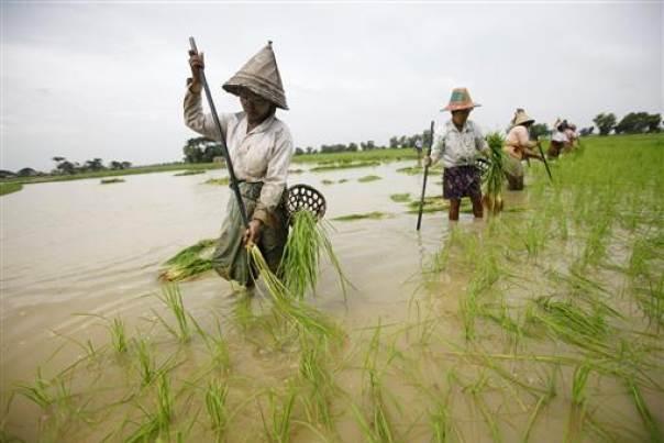 စိုက်ပျိုးရေးကဏ္ဍအတွက်  လက်ရှိအသုံးပြုနေသော ဘဏ္ဍာငွေခွဲတမ်း