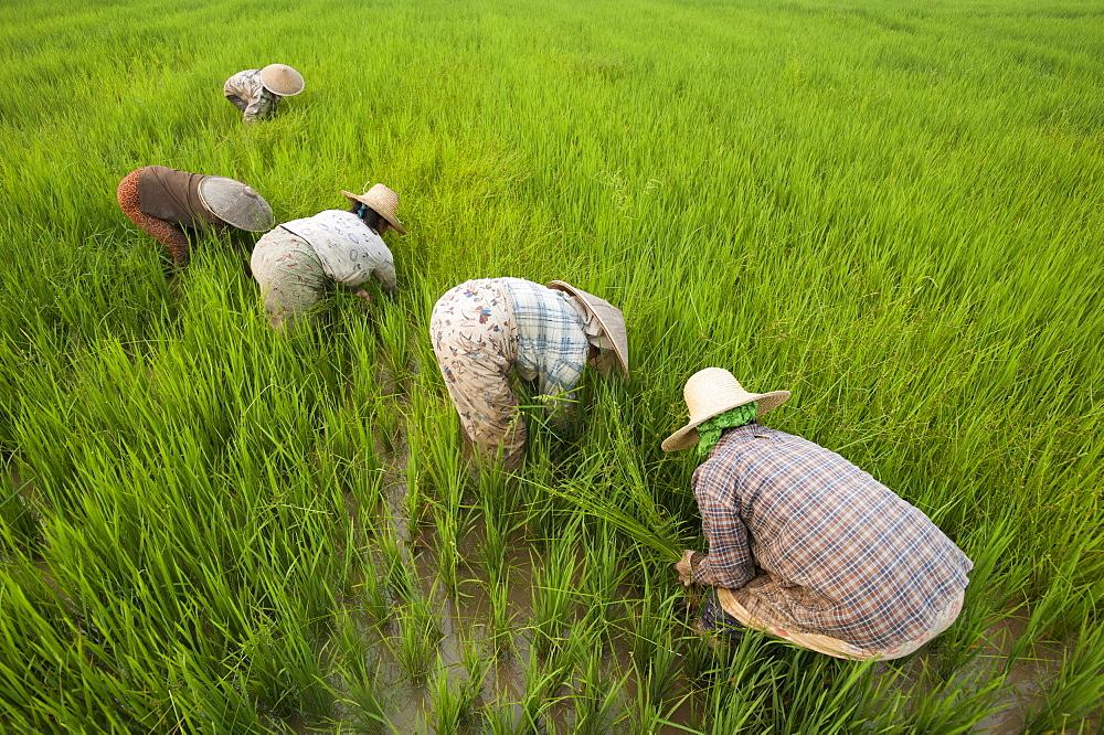 တောင်သူလယ်သမားကြီးများအတွက် နှိုးဆော်ချက် (စက်တင်ဘာလ)
