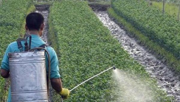 သီးနှံပိုးသတ်ဆေး၏ ဘေးထွက်ဆိုးကျိုးများ