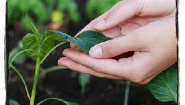 ချစ်ရသော အပင်များနှင့် စကားပြောခြင်း